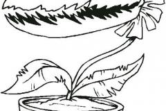 Caricatura-dionaea-muscipula