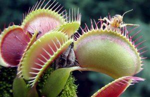 Cuidados básicos de las plantas carnívoras para su correcto cultivo